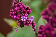Vårblommor och bakgrund med bokeh royaltyfri fotografi