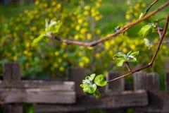 Vårblommor och bakgrund med bokeh royaltyfria foton
