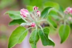 Vårblommor och bakgrund med bokeh royaltyfri bild