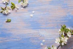 Vårblommor på den blåa bakgrunden av en gammal tappning slösar boaen arkivfoto