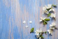 Vårblommor på den blåa bakgrunden av en gammal tappning slösar boaen fotografering för bildbyråer