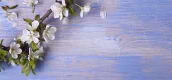 Vårblommor på den blåa bakgrunden av en gammal tappning slösar boaen arkivbild
