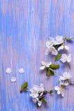 Vårblommor på den blåa bakgrunden av en gammal tappning slösar boaen arkivfoton