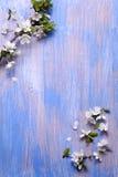 Vårblommor på den blåa bakgrunden av en gammal tappning slösar boaen royaltyfria foton