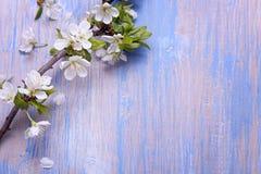 Vårblommor på den blåa bakgrunden av en gammal tappning slösar boaen arkivbilder