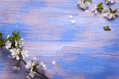 Vårblommor på den blåa bakgrunden av en gammal tappning slösar boaen royaltyfri fotografi