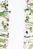 Vårblommor, rosa färger och vit Arkivbild