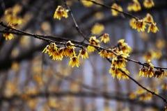 Vårblommor som är enkla men som inte är enkla arkivfoto