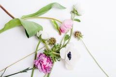 Vårblommor, tulpan, anemon, kryddnejlika och smörblomma Royaltyfri Bild