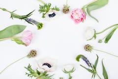 Vårblommor, tulpan, anemon, kryddnejlika och smörblomma Royaltyfri Foto