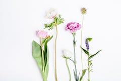 Vårblommor, tulpan, anemon, kryddnejlika och smörblomma på vit Royaltyfria Foton