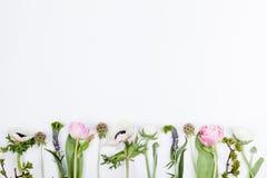 Vårblommor, tulpan, anemoner, kryddnejlikor och smörblommor Royaltyfria Bilder