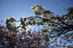 Vårblommor & x28; & x28; blomningar & x29; & x29; Fotografering för Bildbyråer