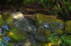 Vårblommorna är blandade Fotografering för Bildbyråer
