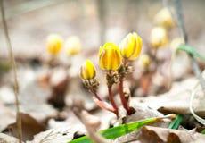 Vårblommorna Royaltyfri Fotografi
