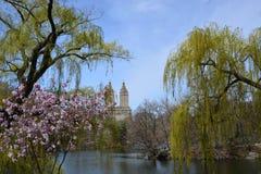 Vårblomning i Central Park Royaltyfri Fotografi