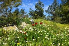 Vårblomning i naturreserv Arkivbilder