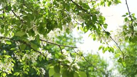 Vårblomningar i Sunny Day arkivfilmer