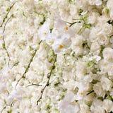 Vårblomningbakgrund Royaltyfri Foto