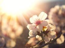 Vårblomningbakgrund Royaltyfria Foton