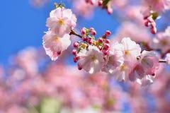 Vårblomningbakgrund Härlig naturplats med det blommande trädet och solen solig dag just rained Abstrakt suddig backgrou Royaltyfri Fotografi