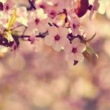 Vårblomningbakgrund Härlig naturplats med det blommande trädet och solen solig dag just rained Abstrakt suddig backgrou Arkivfoto