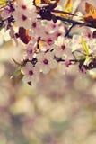 Vårblomningbakgrund Härlig naturplats med det blommande trädet och solen solig dag just rained Abstrakt suddig backgrou Fotografering för Bildbyråer
