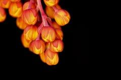 Vårblomningknoppar Arkivfoton