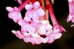 Vårblomningknoppar Royaltyfria Bilder