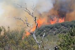 Vårbrand ~ 2013 ~ den annalkande kulleöverkanten #7 för brand Arkivbild