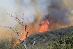 Vårbranden ~ 2013 ~ enorma flammor Arkivbild