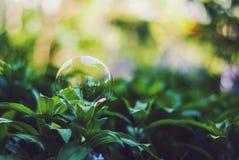 Vårbubbla Arkivbild