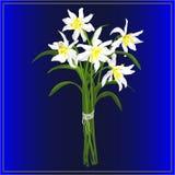 Vårbukett av påskliljor royaltyfri illustrationer