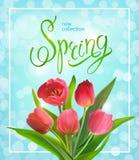 Vårbukett av tulpan Royaltyfria Foton
