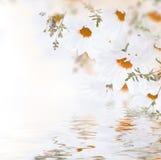 Vårbukett av tusenskönor och vatten Royaltyfri Foto