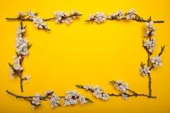 Vårbukettram av filialer av ett blomstra träd på en gul bakgrund, minimalism vektor illustrationer