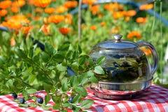 Vård- örtte av blåbärsidor i kokkärlet Royaltyfria Foton