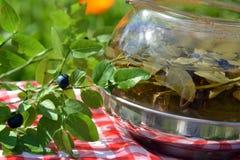 Vård- örtte av blåbärsidor i kokkärlet Royaltyfri Foto