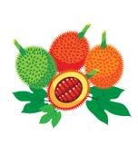 Vård- fördelar för Gac frukt med bladet Arkivfoto
