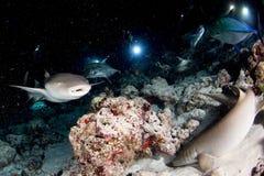 Vårda Shark som är nära upp på svart på natten Arkivbilder