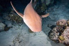 Vårda Shark som är nära upp på svart på natten Fotografering för Bildbyråer