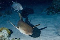 Vårda Shark som är nära upp på svart på natten Arkivfoton