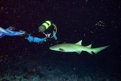 Vårda Shark som är nära upp på svart på natten Royaltyfria Foton