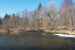 Vårdag, Abava flod, Lettland Royaltyfria Bilder
