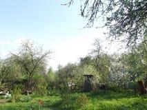 Vårdag i det bevuxna trädgårds- soligt Royaltyfri Bild