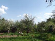 Vårdag i trädgården Arkivbild