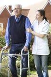 Vårdare som hjälper den höga mannen att gå i trädgård genom att använda gå ramen Royaltyfri Fotografi
