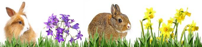 Vårdjur och blommor Royaltyfri Bild