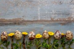 Våreaster träbakgrund med vaktelägg Arkivfoto