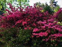 Våren är absolut rosa! royaltyfria bilder